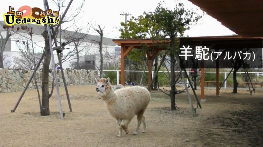 神戶動物王國